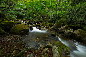 Small creek / stream in Tangjiahe Nature Reserve, Sichuan, China. April. - Jed Weingarten / Wild Wonders of China