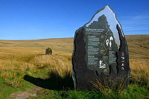 Maen Lila interpretation display sign molded in the shape of the Bronze Age standing stone which is located in the background, Brecon Beacons National Park, Breconshire, Wales, UK. September 2018.  -  Will Watson