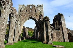 Llanthony Priory, a fomer Augustinian priory dating from circa 1100, Vale of Ewyas, Brecon Beacons National Park, Monmouthshire, Wales, UK. October 2018.  -  Will Watson