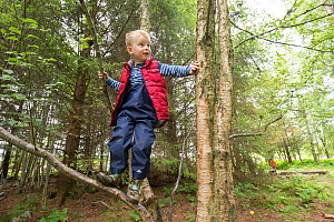 Boy climbing tree in woodland during forest kindergarten session. Aberdeen, Aberdeenshire, Scotland, UK. Editorial use only - SCOTLAND: The Big Picture