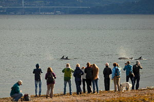 People on beach watching Bottlenose dolphin (Tursiops truncatus) in Moray Firth. Fortrose, Moray, Scotland, UK. - SCOTLAND: The Big Picture