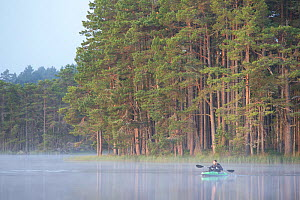 Kayaker on misty loch at dawn with Abernethy Forest in background. Loch Garten Nature Reserve, Cairngorms National Park, Scotland, UK. - SCOTLAND: The Big Picture