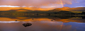 Mountains and rainbow reflected in Loch Morlich in evening light. Cairngorms National Park, Scotland, UK.  -  SCOTLAND: The Big Picture