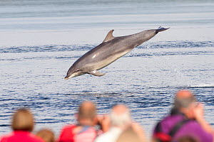 Bottlenose dolphin (Tursiops truncatus) leaping in front of watching tourists, in Moray Firth. Fortrose, Highland, Scotland, UK. July 2012.  -  SCOTLAND: The Big Picture