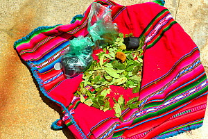 Coca leaves (Erythroxylum coca)on woven cloth, Lake Titicaca, Bolivia. - Daniel  Heuclin
