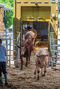 Cattle off loaded at a feed station at the Turkish Border. Animals are transported from all across the EU through the Bulgarian border to Turkey for slaughter. These photos were taken during the hotte... - Jo-Anne McArthur / We Animals