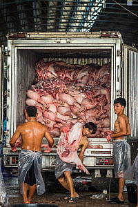 Pig carcasses are unloaded from a refrigerated truck at a meat market, Thailand, February 2019. - Jo-Anne McArthur / We Animals