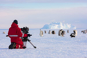 Cameraman Lindsay McCrae filming Emperor penguin (Aptenodytes forsteri) colony for BBC Dynasties Penguin programme. Chicks are on sea ice whilst parents fish at sea. Atka Bay, Antarctica. December 201...  -  Stefan Christmann