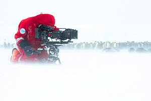 Camerman Lindsay McCrae filming Emperor penguin (Aptenodytes forsteri) colony during winter storm for BBC Dynasties Penguin programme. Atka Bay, Antarctica. May 2017. - Stefan Christmann
