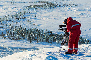 Cameraman Lindsay McCrae filming Emperor penguins (Aptenodytes forsteri) returning to form colony at start of breeding season, for BBC Dynasties Penguin programme, Atka Bay, Antarctica. April 2017. - Stefan Christmann