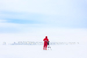 Cameraman Lindsay McCrae filming Emperor penguin (Aptenodytes forsteri) breeding colony on ice shelf in drifting snow, for BBC Dynasties Penguin programme. Atka Bay, Antarctica. October 2017. - Stefan Christmann