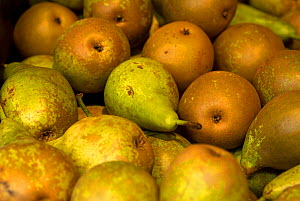 Conference pears for sale in super market. - Matthew Maran