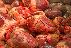 Meat offal, including sheep hearts, for sale at butchers counter. North London, England  -  Matthew Maran