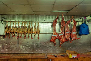 Meat: Chicken and pork carcasses at supermarket, North London, England - Matthew Maran