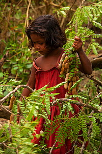 Young Batak girl collecting tamarind in the village of Sitio Kalakwasan in Cleopatra's Needle Critical Habitat, Palawan, the Philippines. - Duncan Murrell
