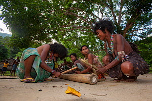 Women of the Batak indigenous tribe using bamboo for percussion for a traditional hunting dance in Sitio Kalakwasan in Cleopatra's Needle Critical Habitat, Palawan, Philippines. - Duncan Murrell