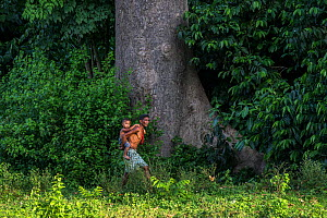 Batak village chief carrying his son past a large tree, Sitio Manggapin, Cleopatra's Needle Critical Habitat, Palawan, the Philippines. - Duncan Murrell