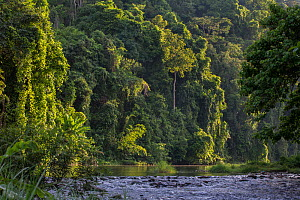 Rainforest and river outside the Batak village of Sitio Manggapin in Cleopatra's Needle Critical Habitat, Palawan, Philippines.  -  Duncan Murrell