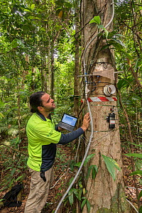 Dr. Alex Cheesman researching changes in phloem flux to environmental variables in two tropical forest canopy tree species at the Daintree Rainforest Observatory, Queensland, Australia. February 2015....  -  Jurgen Freund