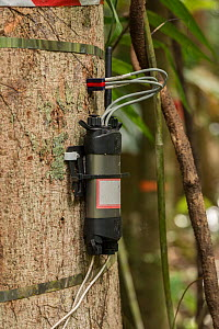 Scientific instruments attached to trees to measure many different elements: carbon dioxide exhaled; tree's water intake and flow; growth rate. Daintree Rainforest Observatory, Queensland, Austral... - Jurgen Freund