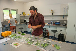 Scientists with leaf samples from Daintree Rainforest Observatory, Queensland, Australia February 2015 - Jurgen Freund