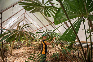 James Cook University's Susan Laurance leads the Daintree Drought Experiment in far north Queensland. The experiement combines the efforts of plant physiologists, ecologists, soil experts, climato... - Jurgen Freund