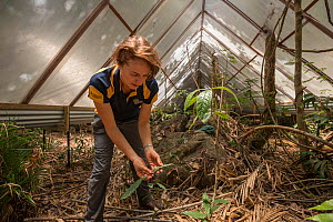 James Cook University's Susan Laurance - Tropical Leader at the Centre for Tropical Environmental and Sustainability Studies and College of Marine and Environmental Sciences leads the Daintree Dro... - Jurgen Freund