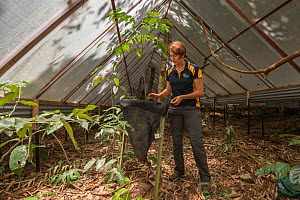 Scientist Susan Laurance leads the Daintree Drought Experiment in far north Queensland. The experiment combines the efforts of plant physiologists, ecologists, soil experts, climatologists and hydrolo... - Jurgen Freund