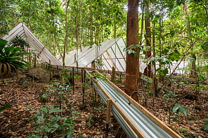 Guttering to redirect water at the Daintree Drought Experiment, where rainforest plants grown under cover to see how they respond to drought. Daintree Rainforest Observatory, northern Queensland, Aust... - Jurgen Freund
