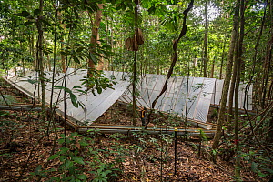 The Daintree Drought Experiment, rainforest plants grown under cover to see how they respond to drought. Daintree Rainforest Observatory, northern Queensland, Australia. September 2015  -  Jurgen Freund