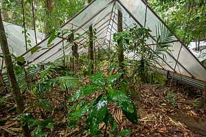 The Daintree Drought Experiment, rainforest plants are grown under cover to see how they respond to drought. Daintree Rainforest Observatory, northern Queensland, Australia. October 2015  -  Jurgen Freund