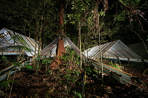 Night time at the Daintree Drought Experiment in northern Queensland with Johan Larson of the Daintree Rainforest Observatory looking for insects during his regular night spotlighting activities. Dain... - Jurgen Freund