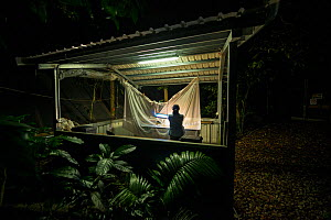 Insects caught with light traps and a white sheet, in the shed surrounded by the Daintree Drought Experiment in northern Queensland, Australia. October 2015 - Jurgen Freund