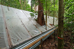 The Daintree Drought Experiment, rainforest plants grown under cover to see how they respond to drought. Daintree Rainforest Observatory, northern Queensland, Australia. October 2015  -  Jurgen Freund