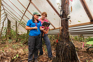 Leader of the Drought Experiment Dr. Susan Laurance and Dr. Yoko Ishida downloading data from the trees carrying scientific instruments at the Daintree Rainforest Observatory, Queensland, Australia. D... - Jurgen Freund