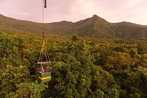 Scientists studying response to wet-dry seasonal transition in rainforest trees, in basket lifted by crane. Daintree rainforest observatory, Queensland, Australia. February 2015  -  Jurgen Freund