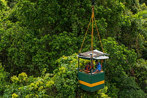 Dr. Raymond Dempsey studying response to wet-dry seasonal transition in rainforest trees, in basket lifted by crane. Daintree rainforest observatory, Queensland, Australia. February 2015 - Jurgen Freund