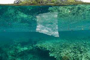 Discarded plastic bag floating underwater in the coral reef, resembling a jellyfish, Maluku, Indonesia, November 2018.  -  Juergen Freund