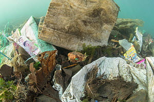 Globefish (Diodon nicthemerus) surrounded by plastic rubbish such as single use plastic bottles, cups, packaging, labels, waste and woven sacks, Sulawesi, Indonesia. November. - Jurgen Freund