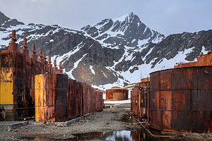Grytviken was the largest whaling station on South Georgia. It was made made famous by Shackleton's reunion with civilization on South Georgia after losing his ship, the Endurance, to Antarctic pa...  -  Alex  Hyde