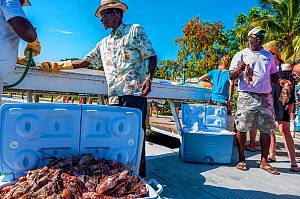 Lionfish derby, a competition to catch invasive Lionfish (Pterois volitans). One team caught 466 lionfish in a single day during the Green Turtle Cay, Bahamas, June 2016  -  Shane Gross