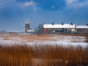 Cley Mill and Reedbed in winter snow storm, Norfolk, UK, February.  -  Ernie  Janes