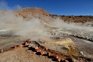 Landscape with geysers and fumaroles, El Tatio geyser field, 4320m above sea level, Andes Mountains, northern Chile. - Daniel  Heuclin