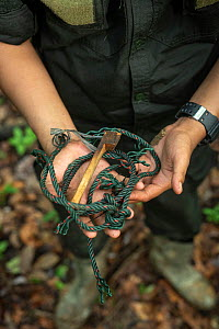 Snare held in human hands - rangers collect data and destroy snares in primary rainforest, in order to protect native wildlife such as elephants, rhinos, tigers and orangutans. September 2018. - Andrew Walmsley
