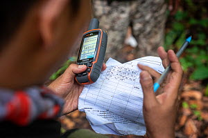 Rangers collecting data in primary rainforest, protecting the native wildlife such as elephants, rhinos, tigers and orangutans. September 2018.  -  Andrew Walmsley