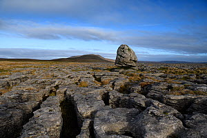 A glacial erratic of Silurian age sandstone, perched upon younger Carboniferous age limestones. The limestone forms a limestone pavement with the hill , Whernside, Yorkshire, England, UK.  -  Graham Eaton
