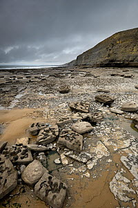 A wave-cut platform in Jurassic age, Liassic limestones (Blue Lias). Jointing and erosion patterns can be seen that have contributed to the break-up of the scattered boulders. Southerndown, South Glam... - Graham Eaton