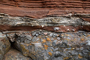 Conglomerate at the unconformity between the Carboniferous limestone below and the Triassic sandstone above at Sully, near Cardiff, South Glamorgan, Wales, UK. September.  -  Graham Eaton