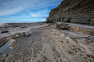 An exposed bedding plane of Blue Lias, Jurassic age, Limestone and shale, showing rectilinear jointing patterns. Southerndown, South Glamorgan Heritage Coast, Wales, UK. September 2017. - Graham Eaton