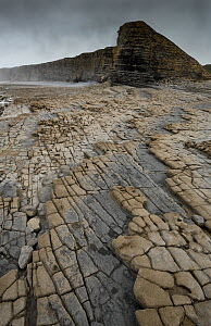 Bedding planes and joint network in Jurassic age Blue Lias limestone and shale exposed at low tide at Nash Point, South Glamorgan Heritage Coast, Wales, September 2017. - Graham Eaton